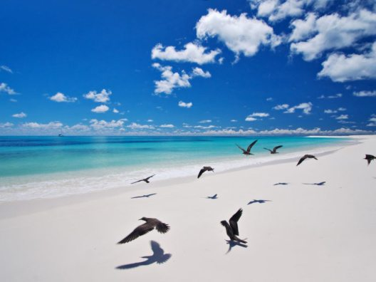 Bird Island (© SeyVillas)